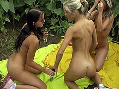 Three steamy Russian amateurs are having spicy lesbian games during a picnic. They pound each other's unused vaginas with dildos before they sit in a row for simultaneous masturbation in steamy threesome lesbian sex video by Club Seventeen.