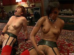 Kinky Ladies Are Force To Suck And Fuck On Camera