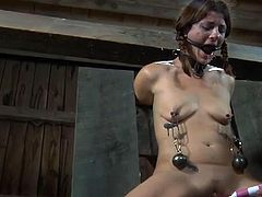 Muzzled gal wants crazy taming