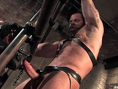 Check this bondage video where these studs have simply an amazing time sucking and fucking one another as well as torturing one another.
