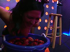 Everyone is dressed up for Halloween for the Playboy morning show. a group of Playboy models have a contest and see who can get the most apples. It's a variation on diving for apples but the girls use their tits instead of the mouths.