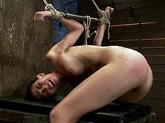 Slim brunette girl gets tied up by her master in some barn. Later on the guy also whips her round ass painfully.