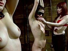 Amazingly hot brown-haired babes get tied up and blindfolded. Later on they also get their tits clothespinned. Of course then they get toyed by their nasty mistress.
