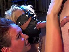 Things are nasty for sleazy chicks as they love obeying guy's dirty desires during this top BDSM trio hardcore