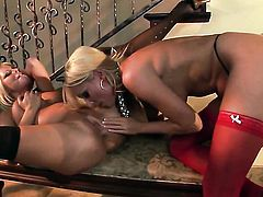 Riley Evans and Diana Doll have a lot of fun in this girl-on-girl action
