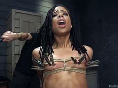The training of O is not easy, even for a slut like Kira Noir. She has performed in various BDSM activities, but this is more humiliating than others. Her breast was not ties so hard in past. Before she could overcome the pain of clothespins on breast and pussy, a big cock has started to drill her ass hole.