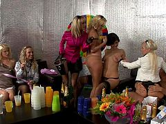 Several drunk bitches engulf on a lone cock in this cute orgy scene