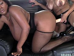 Curvaceous Havana Ginger doing naughty things with her ebony babe